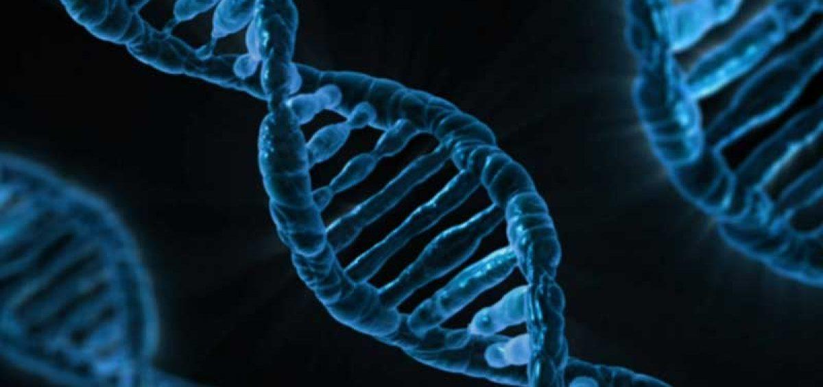 DNA Preservation