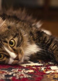 Have you considered pet hospice?