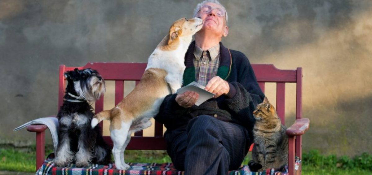 Senior with dogs and cat