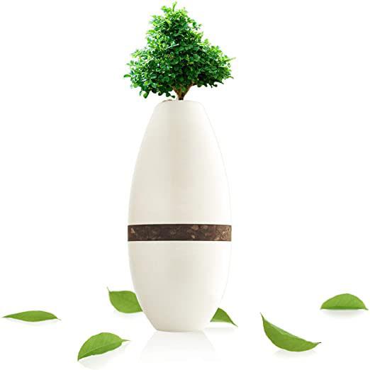 Biotree Urn